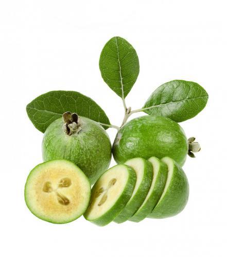 guava 6