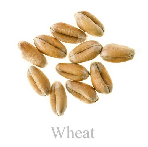 Wheatedited
