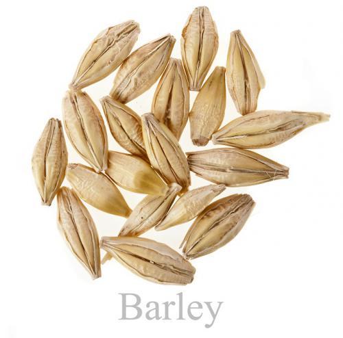 Barleyedited